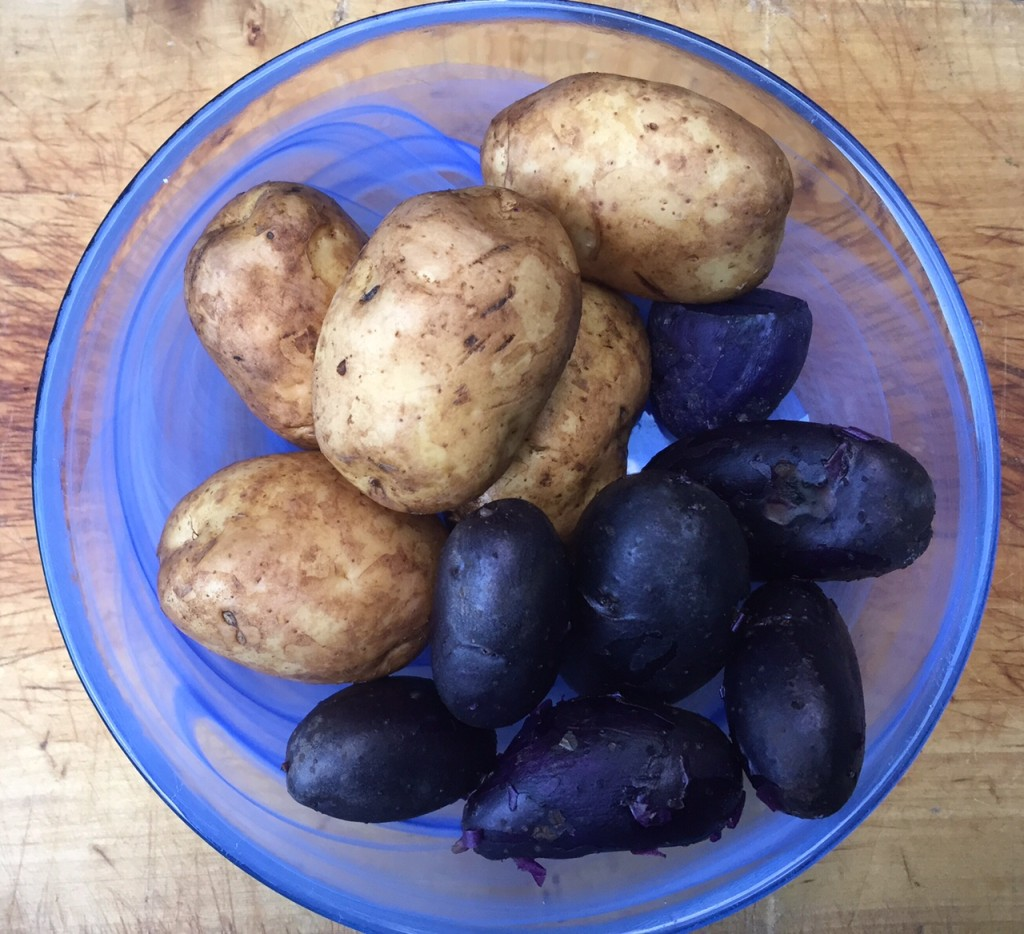A bowl displaying white and blue potatoes