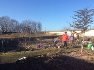 Under blue skies volunteers clear ground at Granton Castle walled garden