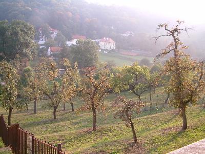 prague orchard